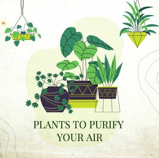 Plants That Help Purify Your Air